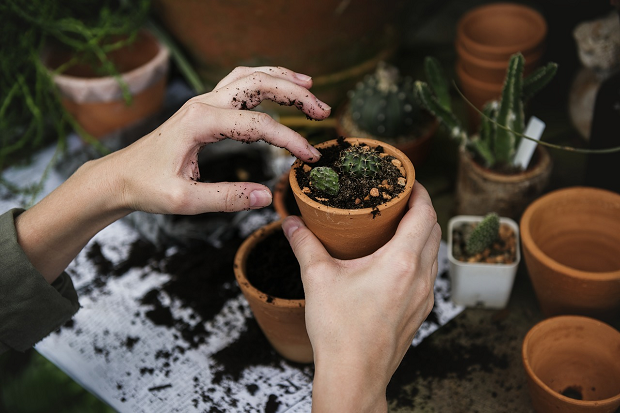 Celebrity influencers 'boost millennial gardening activity'